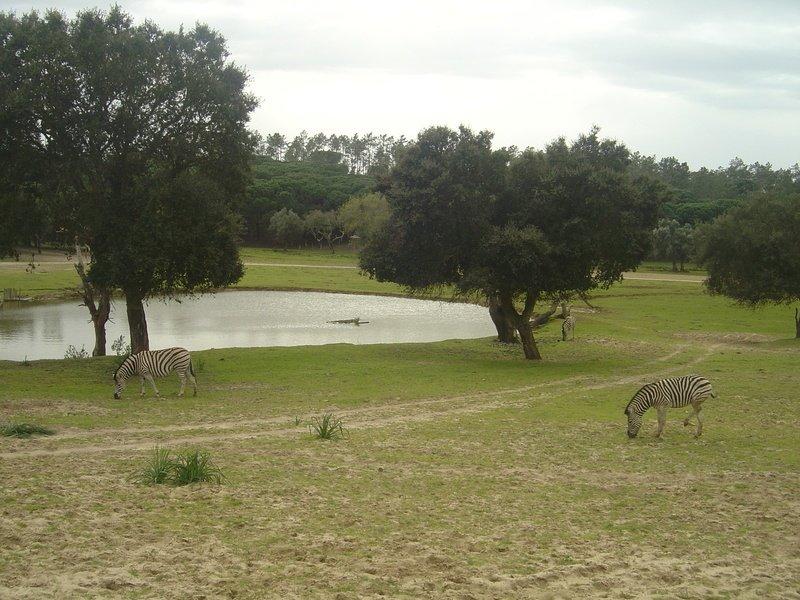 Badoca Park